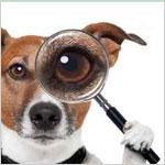 WordPress 検索結果を特定のカテゴリーから表示させる、ちょっと良いカスタマイズ方法